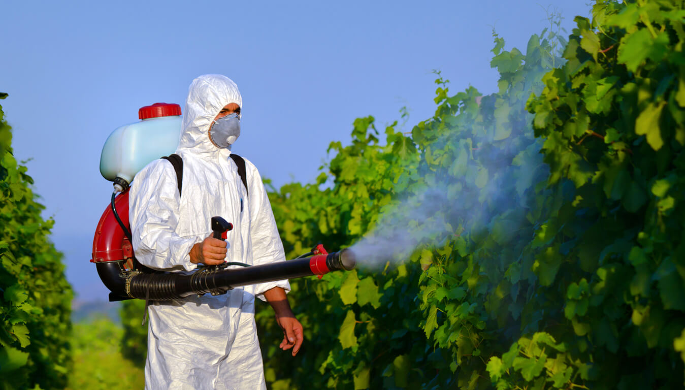 ابادة الحشرات بالضمان,التخلص من الحشرات بالرياض,مكافحة الحشرات