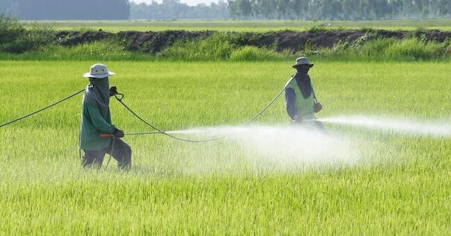 ارخص شركة رش مبيدات بالرياض,ارقام شركات,ابادة الآفات الزراعية
