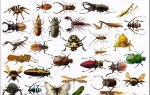شركة مكافحة الحشرات بجده