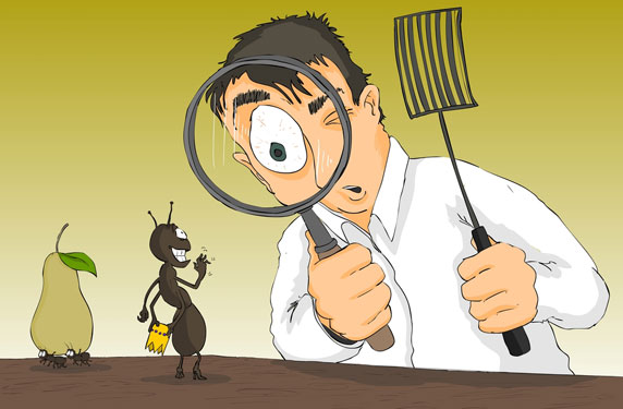 نتيجة بحث الصور عن شركة مكافحه حشرات بجازان