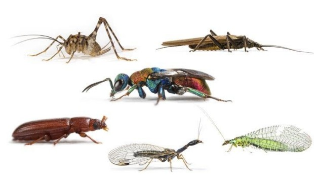 شركه مكافحة حشرات بالجبيل