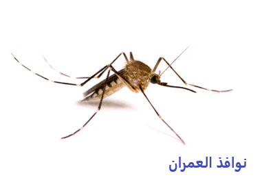 شركة مكافحة حشرات ببيشة